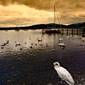 Swan Playground