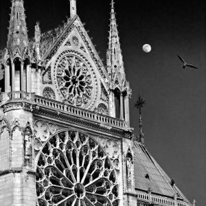 Moon And a Bird